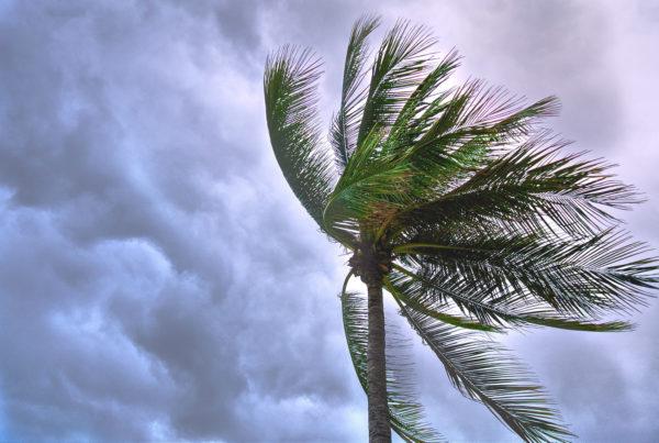hurricane tree blown